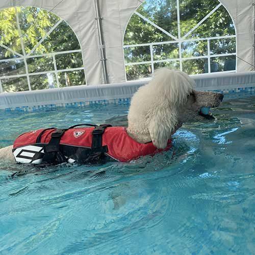http://www.decouture-dogresort.it/wp-content/uploads/2017/08/piscina2-500x500.jpg