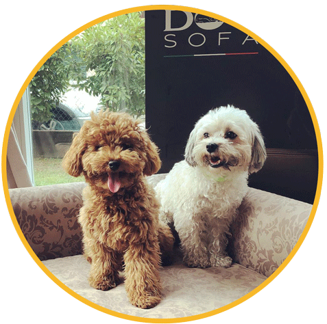 //www.decouture-dogresort.it/wp-content/uploads/2019/11/tondoo.png